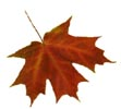 Fall is almost here ~ great time to look for homes!
